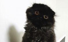 black cat big eyes gif - Google Search