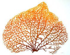 Image result for meredith woolnough