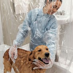 "Intriguing! and Smart! A shower curtain with built-in gloves - so you can bathe your dog without getting wet every time she ""shakes"""