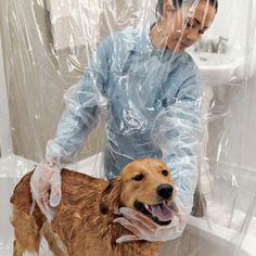 Pet Shower Curtain ha!