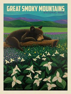 Anderson Design Group – American National Parks – Great Smoky Mountains National Park: Wildflower Heaven