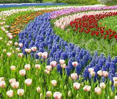 Image Search Results for gardens
