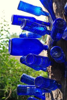 Picture of cobalt blue bottles installed on a tree trunk. www.TheBlueBottleTree.com