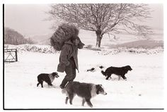 George Ayre with hay for sheep by James Ravilious © Beaford Arts