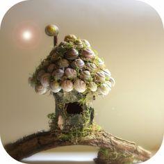 Daily Colours : Fairy Houses - Snail Shell Fairy House Tutorial