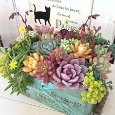Succulents - Sun and Garden Succulents In Containers, Cacti And Succulents, Planting Succulents, Cactus Plants, Garden Plants, Planting Flowers, Succulents Wallpaper, Succulents Drawing, Succulent Gardening