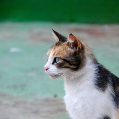 Asóciate | Associació Ràpita Felina