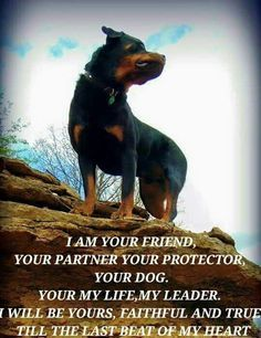 """Obtain excellent suggestions on """"Rottweiler puppies"""". They are actually readily available for you on our web site. Rottweiler Quotes, Rottweiler Love, Rottweiler Puppies, Rottweiler Pictures, German Rottweiler, Big Dogs, I Love Dogs, Puppy Love, Dogs And Puppies"""