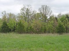 Land for Sale near Rolla, Missouri - Phelps County  - 7.4 acres - 1136636