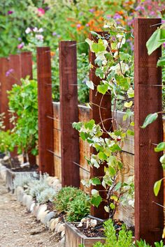 attractive wooden and wire trellis. might want to increase post spacing for grapes - image