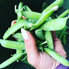 #homegrown #local Sweet Peas will be in your menus next week friends  #finally #worththewait #pesticidefree #herbicidefree . . #teamleeandmarias