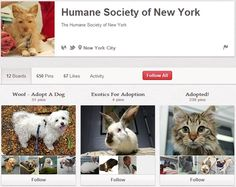 Humane Society of New York Humane Society, New York City, Exotic, Adoption, Activities, Usa, Dogs, Foster Care Adoption, New York