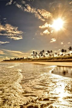 Our backyard! Palm trees + ocean + beach + sunny sky. Paradise.