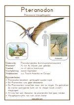 Natuurkaart Dinosauriërs – Pteranodon