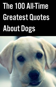 The 100 All-Time Greatest Quotes About Dogs