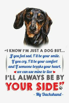 Looking for a list of great Dachshund quotes and sayings? Check out this collection of Dachshund inspired quotes and sayings with images. Dapple Dachshund Puppy, Dachshund Funny, Dachshund Puppies For Sale, Dachshund Quotes, Dachshund Shirt, Dachshund Gifts, Dachshund Love, Black Dachshund, Daschund