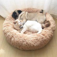 Buy Long Plush Super Soft Pet Bed Kennel Dog Cat Winter Warm Sleeping Bag Puppy Cushion Mat Cat Supplies at Wish - Shopping Made Fun Shih Tzu, Heavenly Bed, Dog Weight, Cockerspaniel, Pet Odors, Pet Safe, Cute Kittens, Chihuahua, Your Pet