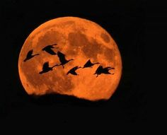 Calligraphy of geese against the sky - the moon seals it - photo embodies the haiku by Buson-idea for silhouette earrings Shoot The Moon, Beautiful Moon, Over The Moon, Bird Feathers, Full Moon, Moonlight, Creatures, Favorite Things, Harvest Moon