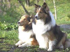 Pメルヘンには、大型犬も泊まれます。もちろん、お部屋にも入れます♪