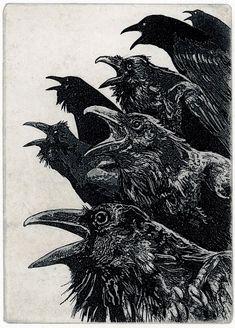 036762a962be545df8c54f7662235168--raven-bird-the-raven.jpg 672×936 pixels