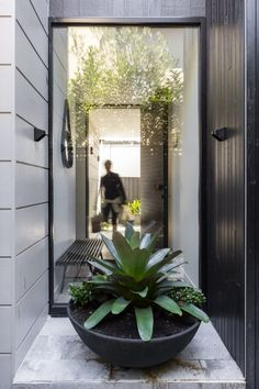 The rose bay house by the designory is a fully realised example of design c Outdoor Pots, Outdoor Gardens, Outdoor Living, Outdoor Spaces, Garden Architecture, Architecture Design, Rose Bay, Front Entrances, Small Garden Design