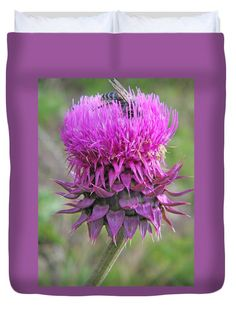 Purple Russian Thistle