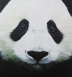 Panda, by Sam Ault