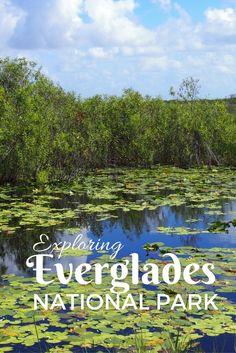 Tips for visiting Everglades National Park