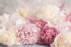 Fine Art Floral Photography  Title: An Abundance of Peonies Armloads of pink and white French peonies – what could be better?    This listing is