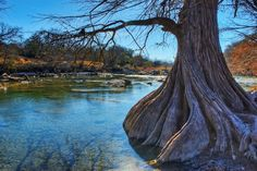 Guadalupe River State Park. | 35 Gorgeous Photographs From Deep In The Heart Of Texas
