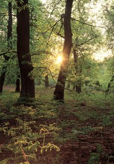 Archaeology and History of Medieval Sherwood Forest: Guest Blog entry: Promoting Sherwood Forest