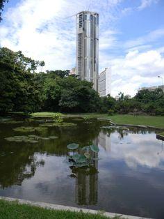 Jardín Botánico de Caracas - Venezuela Tuya