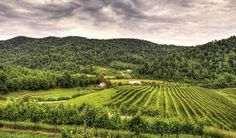 The 10 Best Wine Tasting Vacations in the World – Charlottesville, Virginia