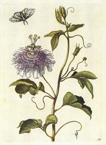 Maria Sibylla Merian was born in Frankfurt am Main, Germany on April 4, 1647.