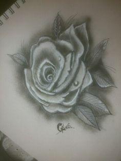 Greytone rose, quick sketch with pencils and airbrush.