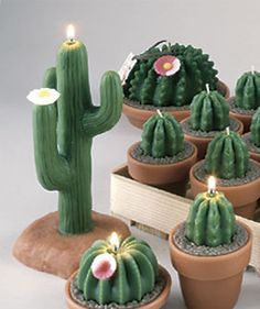 cactus candels  pined by  M.I