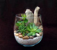 Trendy et facile à faire, le terrarium plante est aujourd'hui une idée très originale et jolie pour la décoration de votre espace.