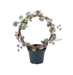 Fri frakt over 750 kr og gratis frakt i Hamar. Planter Pots, Plant Pots