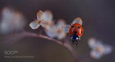 uğur böceği by yasinmortas