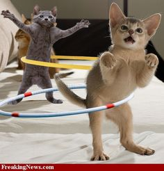 """Look at the picture... on the left, the """"Peanut butter jelly time"""" cat, on the right... the cat looks like a T-REX!"""