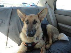 http://frgsr.rescuegroups.org/animals/detail?AnimalID=9785103