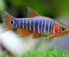Responsible Care for Freshwater Fish Aquarium Colorful Fish, Tropical Fish, Aquarium Fish For Sale, Nano Aquarium, Live Aquarium, Aquarium Ideas, Fishing World, Usa Fishing, Fishing Times