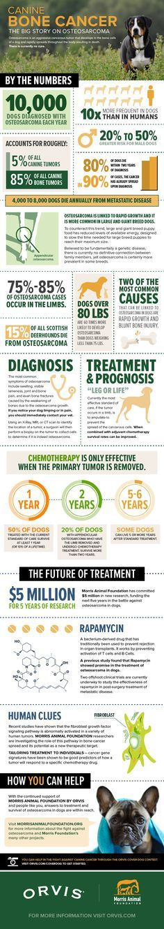 Osteosarcoma is an aggressive cancerous tumor that develops in the bone cells of a dog and rapidly spreads throughout the body resulting in death. There is currently no cure.