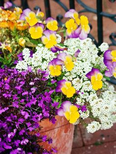 Celebrate Spring with Soft Colors.  What could be prettier than this combination of 'Riviera Midnight' lobelia, 'Yellow Frost' viola, and white sweet alyssum? These beauties are the perfect way to start the gardening season.  Growing Conditions: Full sun or partial shade and well-drained soil.