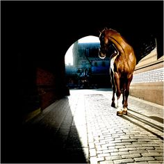 That must have been one hard photo to get. Tunnel, pavers, sunlite background Plus a horse...not easy!