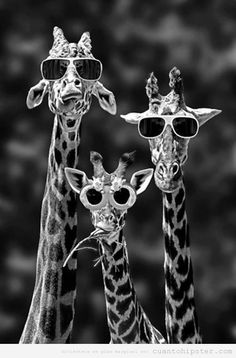 foto-graciosa-jirafas-hipsters-gafas-sol-indies.jpg (500×760)