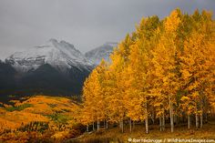 Beautiful pictures of fall in the San Juan Mountains in Colorado.