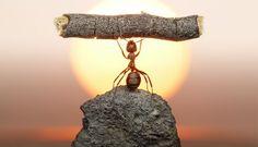 A Parábola da demissão da formiga desmotivada.Qualquer semelhança NÃO é mera coincidência.