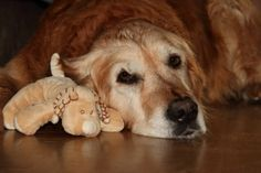 10 early warning signs of canine cancer