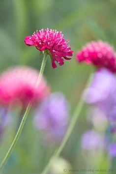 Geniesser-Garten : Staudenbeet Backyard Landscaping, Garden Plants, Purple, Pink, Exterior, Landscape, Drawings, Flowers, Color